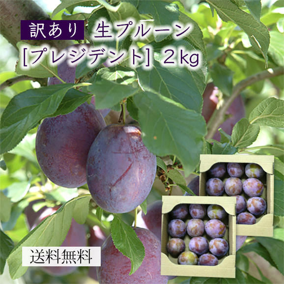 山形産【訳あり】生プルーン[プレジデント]2kg