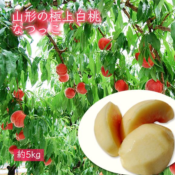山形の極上白桃なつっこ[約5kg]15~20玉