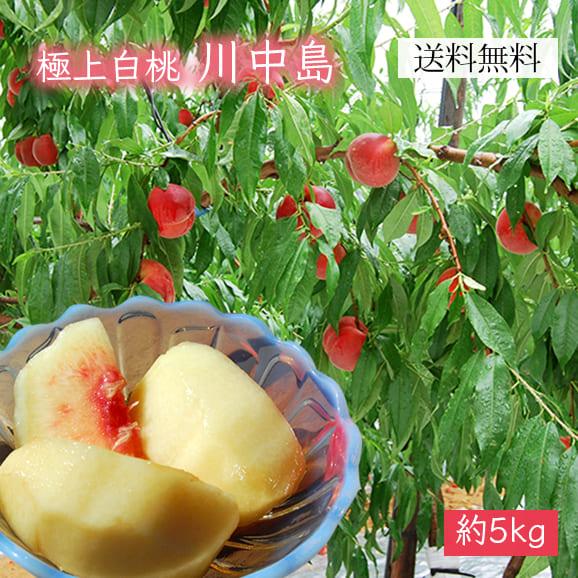 極上白桃川中島約5kg(15~20玉)