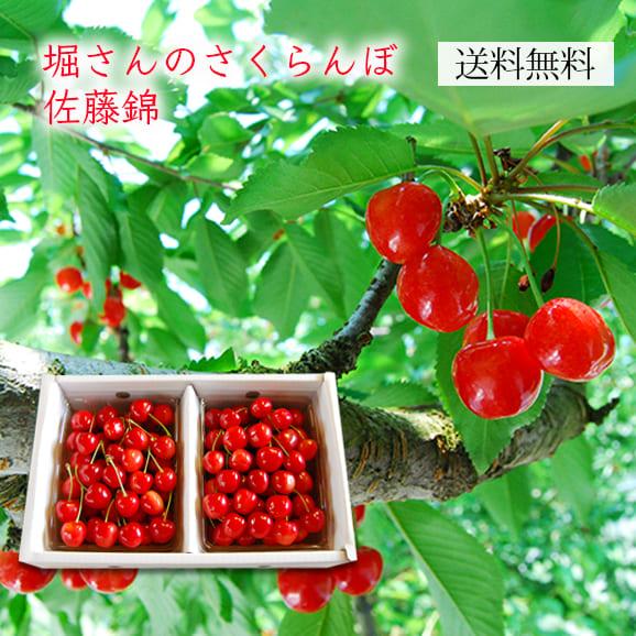 [送料無料]堀さんのさくらんぼ佐藤錦700gパック詰(350g×2パック)
