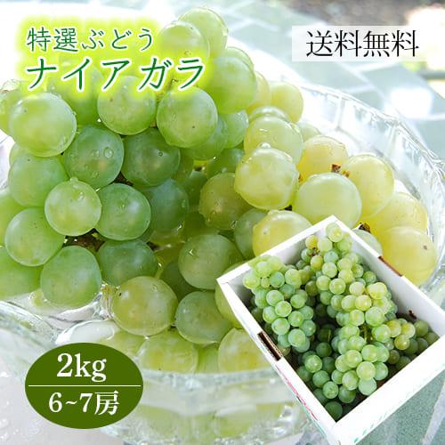 特選ぶどうナイアガラ2kg(6~7房)