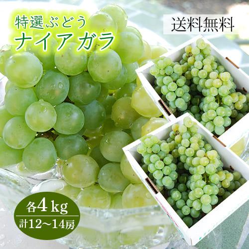 特選ぶどうナイアガラ4kg(12~14房)