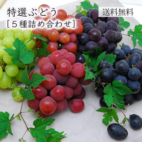 特選ぶどう5種詰め合わせ(シャインマスカット・ピオーネ・他3種)