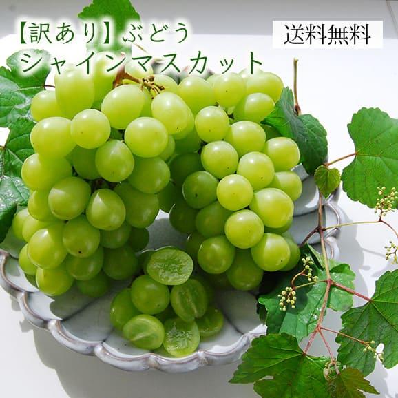 《訳あり》山形県産ぶどう シャインマスカット1.5kg前後(2~3房)