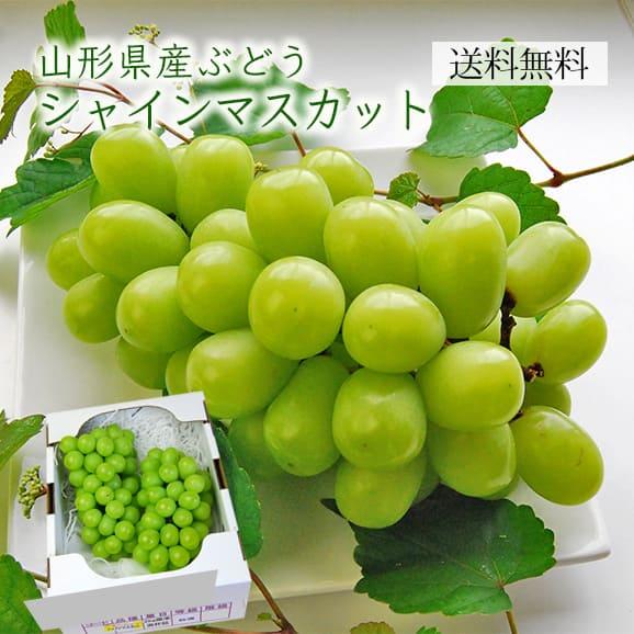 特選ぶどうシャインマスカット2房(1房500~600g)