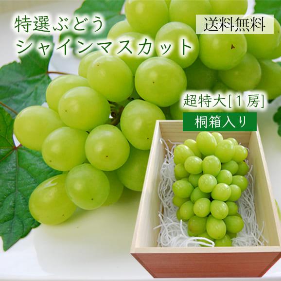 《旬果》特選ぶどうシャインマスカット超特大1房(700g以上)[桐箱入り]