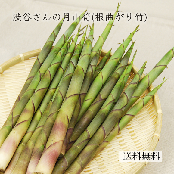 [送料無料]渋谷さんの月山筍(根曲がり竹)1kg(15本前後) 甘辛ナンバン味噌付