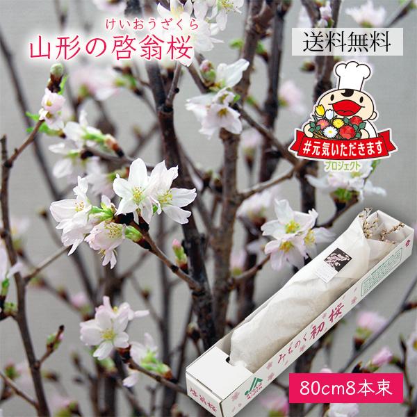 山形の啓翁桜(けいおうざくら)[80cm8本束]