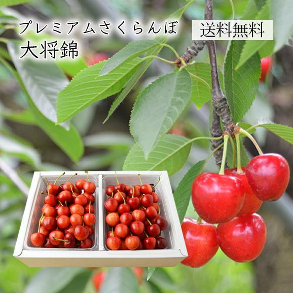 プレミアムさくらんぼ大将錦1kgバラ詰Lサイズ以上(500g×2)