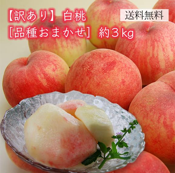 《訳あり》白桃 品種おまかせ約3kg(7~15玉)