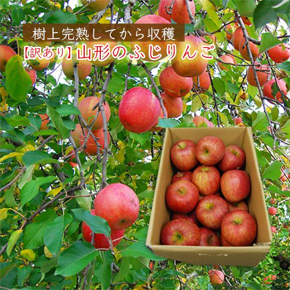 【訳あり】山形のふじりんご5kg