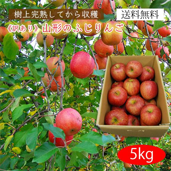《訳あり》山形のふじりんご5kg(玉数おまかせ)