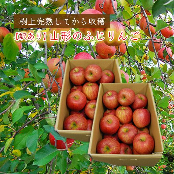 【訳あり】山形のふじりんご10kg [5kg×2箱]