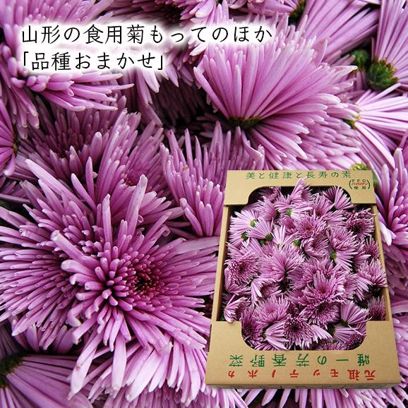 山形の食用菊もってのほか1kg(品種おまかせ)