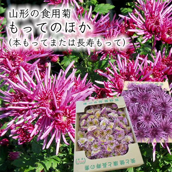 山形の食用菊もってのほか1kg(本もってまたは長寿もって)
