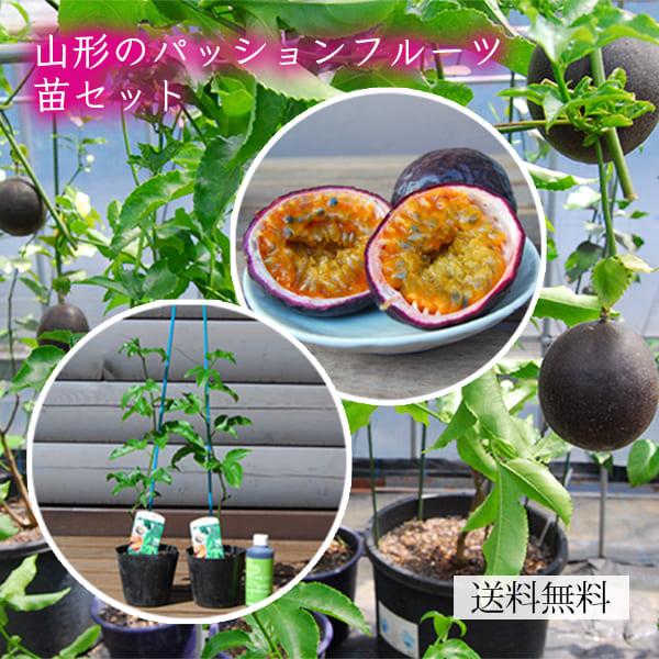 山形のパッションフルーツ苗セット(苗2本・栄養活性剤付き)