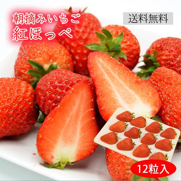 朝摘みいちご紅ほっぺ(12粒入)