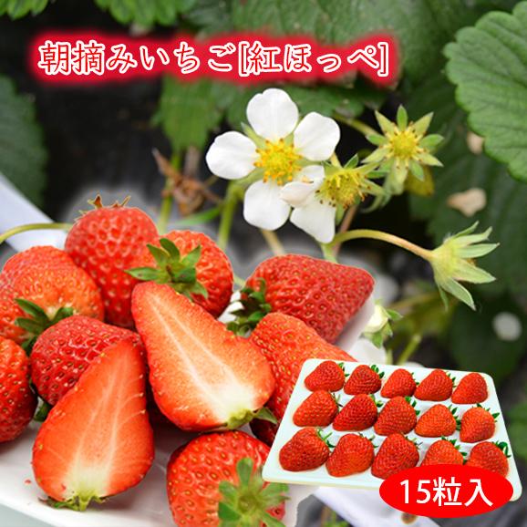 [送料無料]朝摘みいちご紅ほっぺ[15粒入]
