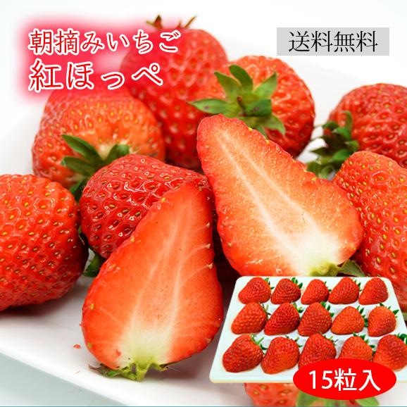 朝摘みいちご紅ほっぺ(15粒入)