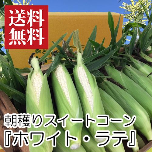 朝穫り白トウモロコシ『ホワイトラテ』