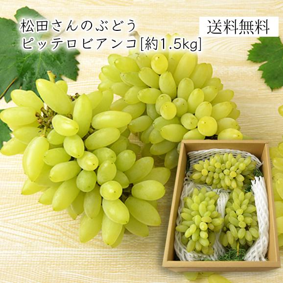 松田さんの山形ぶどう「ピッテロビアンコ」約1.5kg(3房)