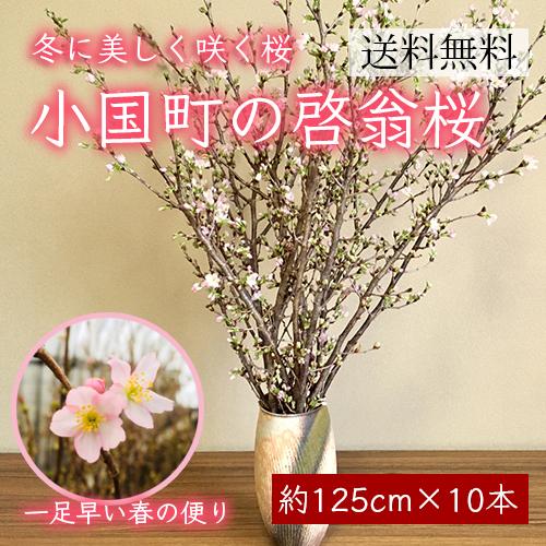 小国町の啓翁桜[約125cm×10本]