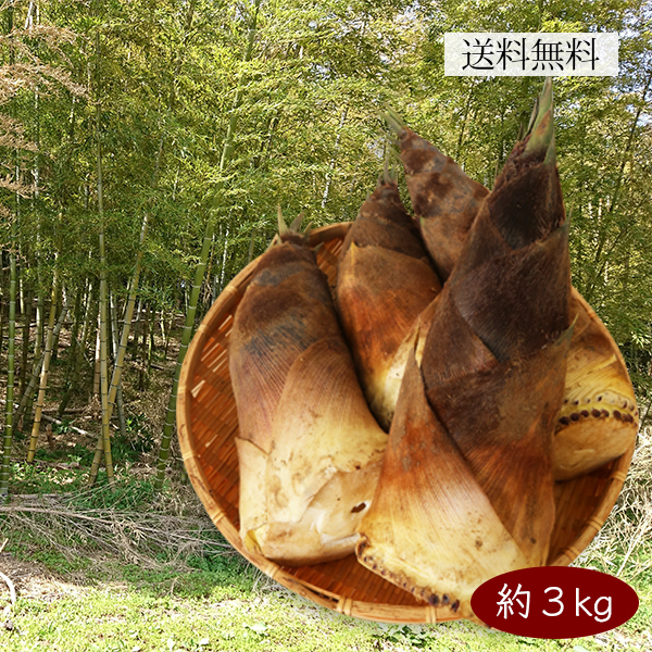 山形の朝堀りたけのこ(谷定孟宗)3kg