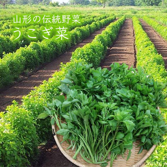 山形の伝統野菜うこぎ菜[400g]