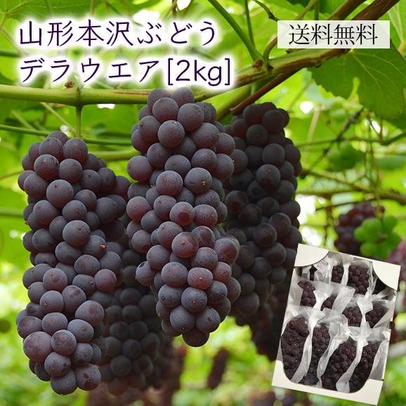 山形本沢ぶどうデラウエア約2kg(L~2L/12~16房)