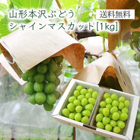 山形の本沢ぶどうシャインマスカット約1kg(パック入)[500g×2]