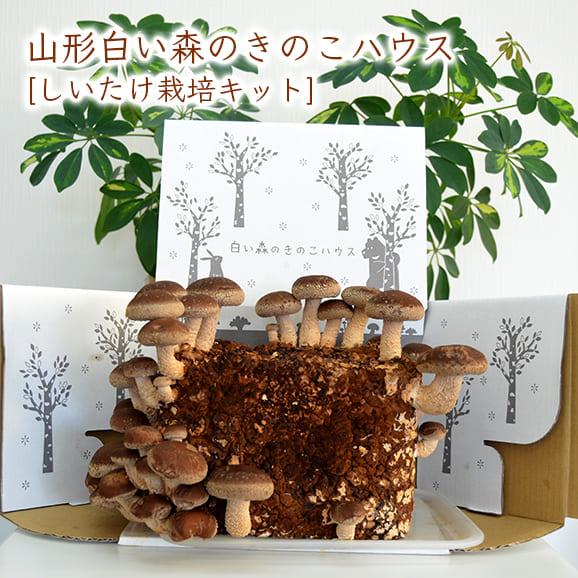 山形白い森のきのこハウス(しいたけ栽培キット)