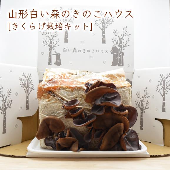 山形白い森のきのこハウス(きくらげ栽培キット)