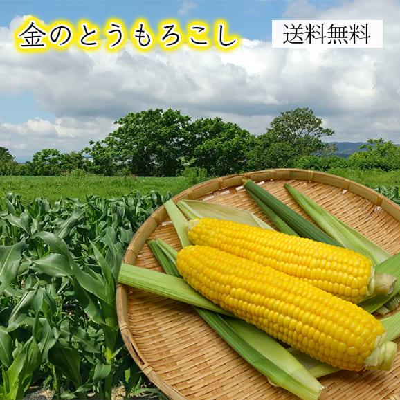 金のとうもろこし(10~12本)