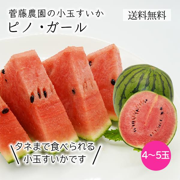 菅藤農園の小玉すいかピノガール4~5玉