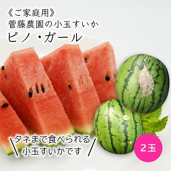 《ご家庭用》菅藤農園の小玉すいかピノガール2玉(約2kg×2玉)