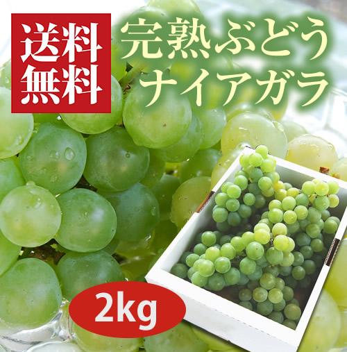 完熟ぶどうナイアガラ2kg(6~7房)