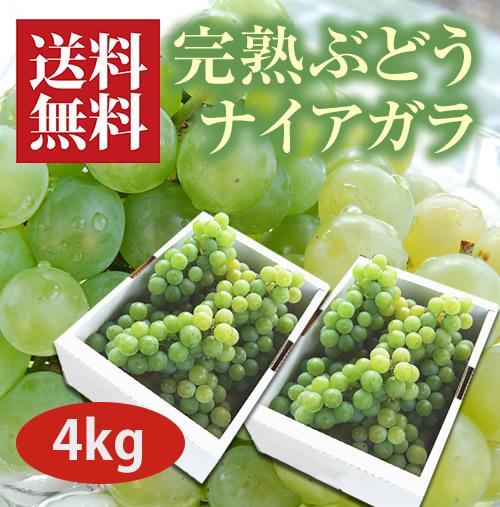 完熟ぶどうナイアガラ4kg(12~14房)
