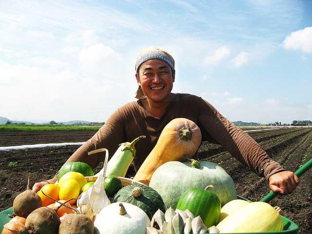 農薬未使用 すこやか野菜セット