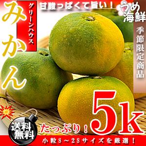 佐賀県産 グリーン ハウスみかん 5kg(小粒S〜2Sサイズ)【送料無料】みかん※代金引換不可【ギフト】