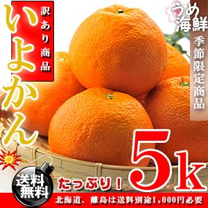 いよかん 完熟 お試し 5kg(M〜2Lサイズ)伊予柑【訳あり】【送料無料】