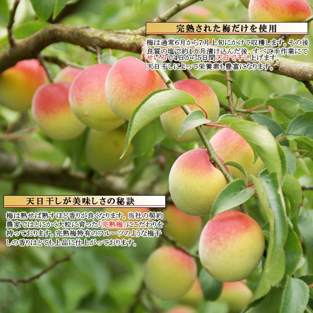 自然に落ちた梅だからやわらかくって美味しい梅干しになります。通販で人気の南高梅 梅乃音