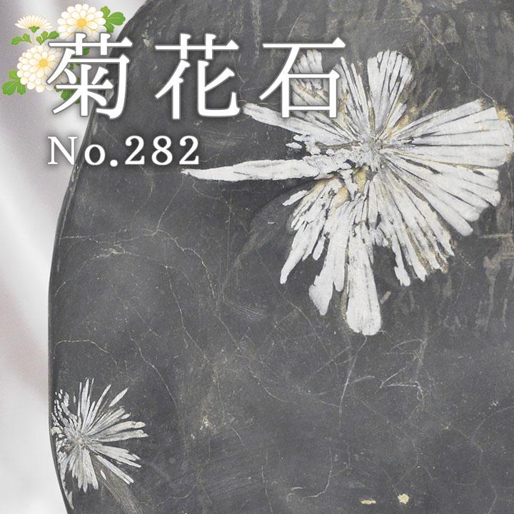 菊花石 No.282 【鑑賞用鉱石】