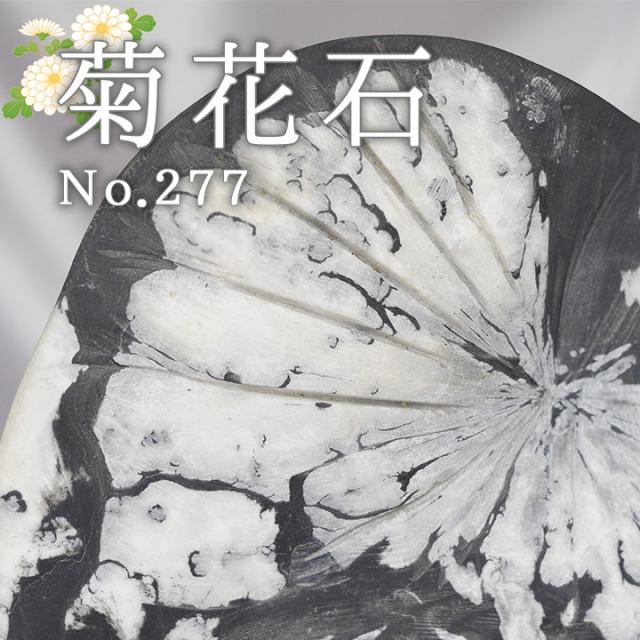 菊花石 No.227 【鑑賞用鉱石】