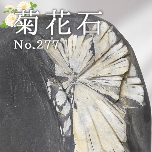 菊花石 No.234 【鑑賞用鉱石】