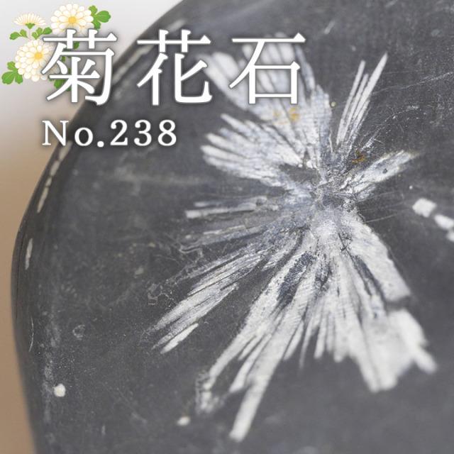 菊花石 No.238 【鑑賞用鉱石】