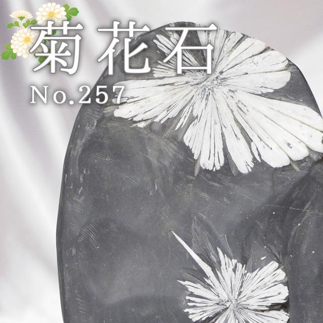 菊花石 No.257 【鑑賞用鉱石】