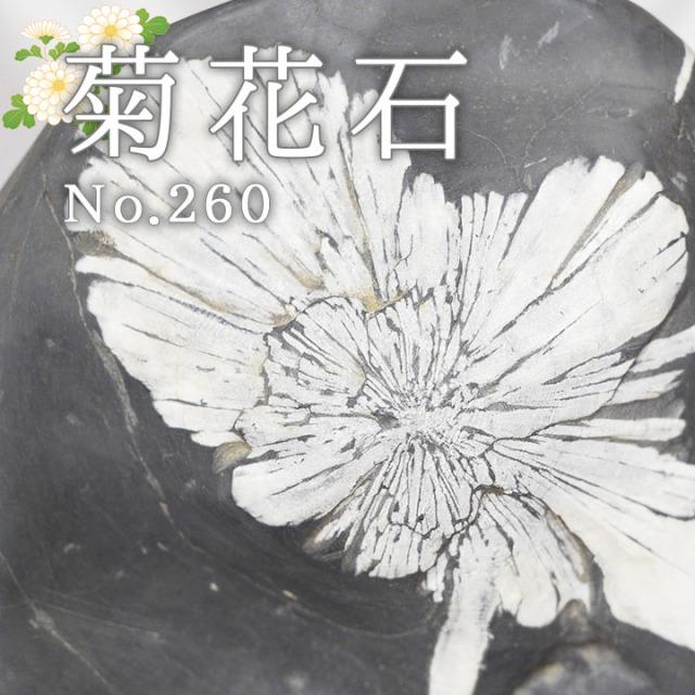 菊花石 No.260 【鑑賞用鉱石】