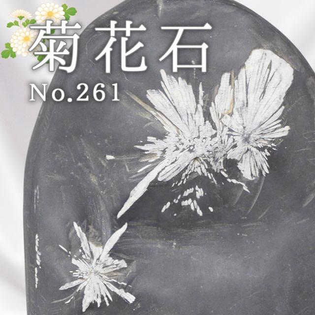 菊花石 No.261 【鑑賞用鉱石】