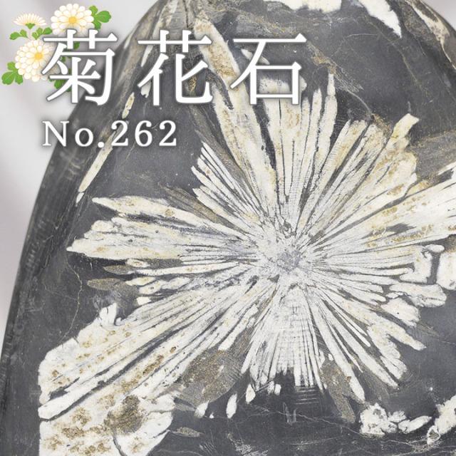 菊花石 No.262 【鑑賞用鉱石】