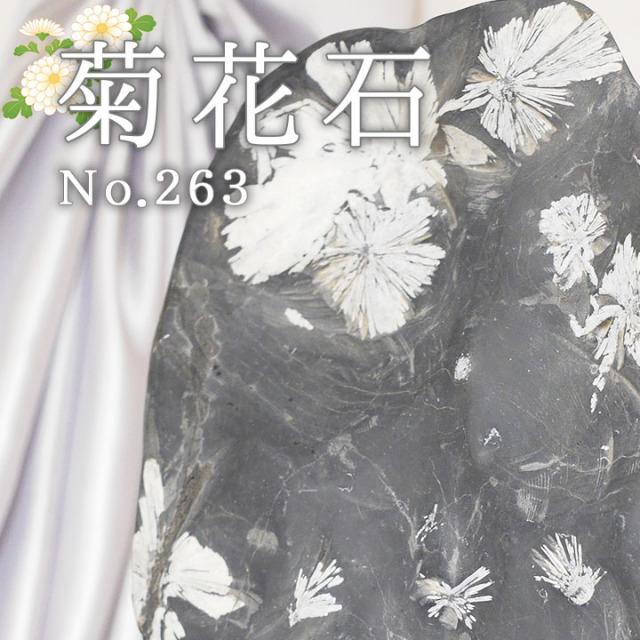 菊花石 No.263 【鑑賞用鉱石】